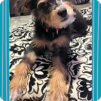Adopt A Pet :: Cahto - Genoa City, WI