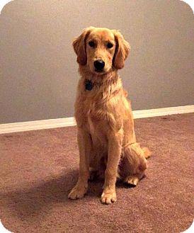 Golden Retriever Dog for adoption in Glendale, Arizona - (PLACED) Adoption_Pending