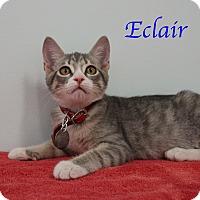 Adopt A Pet :: Eclair - Bradenton, FL