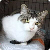 Adopt A Pet :: Janet - Concord, NH