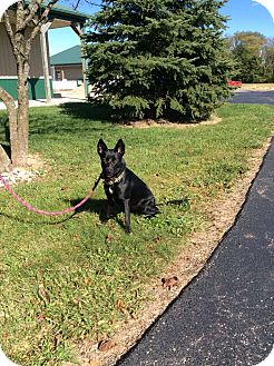 Australian Cattle Dog/Labrador Retriever Mix Dog for adoption in Mechanicsburg, Ohio - Cree