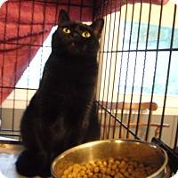 Adopt A Pet :: Erin - Riverside, RI