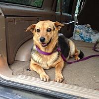 Adopt A Pet :: Krissy - Acworth, GA