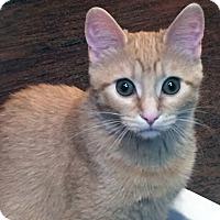 Adopt A Pet :: Mila - Mississauga, Ontario, ON