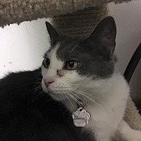 Adopt A Pet :: Fawna - Powell, OH