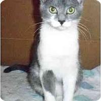 Adopt A Pet :: Simon - Odenton, MD