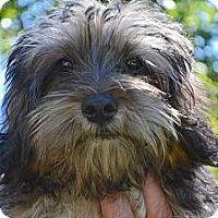 Adopt A Pet :: *Buster - PENDING - Westport, CT