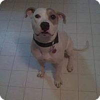 Adopt A Pet :: Buddy - Berlin, CT