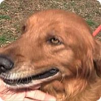 Adopt A Pet :: Drake - Cheshire, CT
