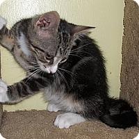 Adopt A Pet :: Molecule - Acme, PA