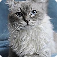 Adopt A Pet :: Kaylee - Columbus, OH