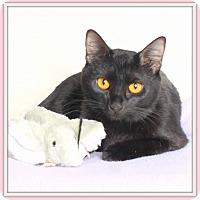 Adopt A Pet :: Cairo - Glendale, AZ