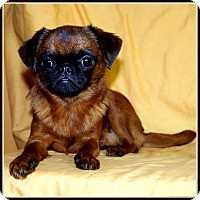 Adopt A Pet :: KIBBLES in Wichita, KS. - Seymour, MO
