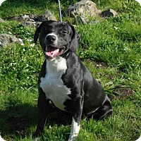 Adopt A Pet :: HUGO - McKinleyville, CA
