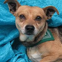 Adopt A Pet :: Bingo Gonska - Cuba, NY