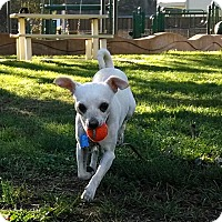 Adopt A Pet :: Gavin - San Francisco, CA