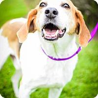 Adopt A Pet :: Halpert - Elkton, FL