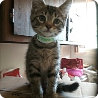 Adopt A Pet :: tennessee - Muskegon, MI