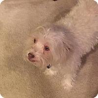 Adopt A Pet :: DeDe - Phoenix, AZ