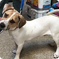Adopt A Pet :: Patrick - Modesto, CA