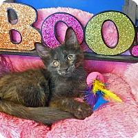 Adopt A Pet :: Simone - Glendale, AZ