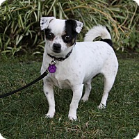 Adopt A Pet :: DIGGITY - Newport Beach, CA