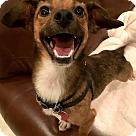 Adopt A Pet :: Cass