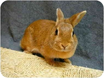 Dwarf Mix for adoption in Newport, Delaware - Mariposa
