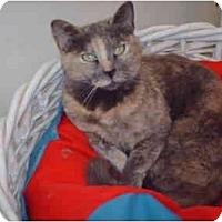 Adopt A Pet :: Molly - El Cajon, CA