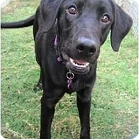 Adopt A Pet :: Ursula - Richmond, VA