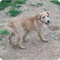 Adopt A Pet :: Howdy Doodie - Albany, NY