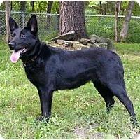 Adopt A Pet :: Bellarosa - Mocksville, NC