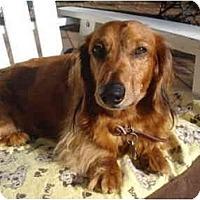 Adopt A Pet :: Baron - San Jose, CA