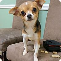 Adopt A Pet :: NUGGET - AUSTIN, TX