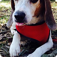 Adopt A Pet :: Jerry Lee - Killian, LA