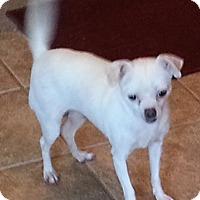 Adopt A Pet :: Mimi - San Antonio, TX