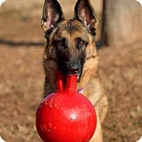 Adopt A Pet :: Layla - Dacula, GA