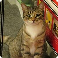 Adopt A Pet :: Cupid - Raritan, NJ