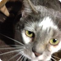 Adopt A Pet :: Puma - Monroe, GA