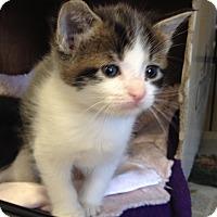 Adopt A Pet :: Julie - Island Park, NY