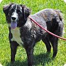 Adopt A Pet :: MARLOW