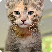 Adopt A Pet :: Fannie Anne - Davis, CA