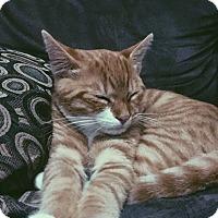Adopt A Pet :: Casey - Whitestone, NY