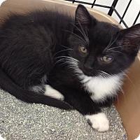 Adopt A Pet :: C.J. - Horsham, PA