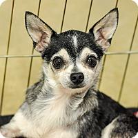 Adopt A Pet :: Mikey - Gainesville, FL
