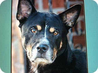 Husky Mix Dog for adoption in Los Angeles, California - MAGIC VON MYLAU
