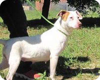 Hound (Unknown Type)/Labrador Retriever Mix Dog for adoption in Darien, Georgia - Tia