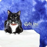 Adopt A Pet :: Zack - Cincinnati, OH