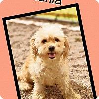 Adopt A Pet :: Petunia - Scottsdale, AZ