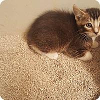 Adopt A Pet :: Finn - Tucson, AZ